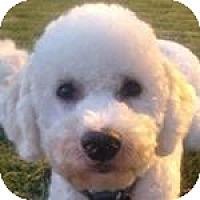 Adopt A Pet :: Jay Jay - La Costa, CA
