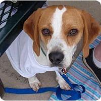 Adopt A Pet :: Bert - Indianapolis, IN