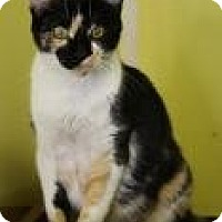 Adopt A Pet :: Morticia - West Des Moines, IA