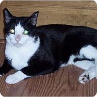 Adopt A Pet :: David - Delmont, PA