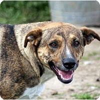 Adopt A Pet :: Tigger - Glenpool, OK