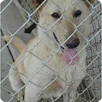Adopt A Pet :: Bambi - Fowler, CA