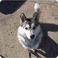 Adopt A Pet :: Scar and Diego - Belleville, MI