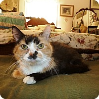 Adopt A Pet :: Cassie - Covington, KY