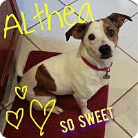 Adopt A Pet :: Althea - Homewood, AL