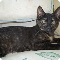 Adopt A Pet :: Tinsel - Acme, PA