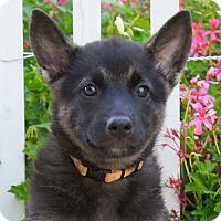 Adopt A Pet :: Clarissa von Calw - Thousand Oaks, CA