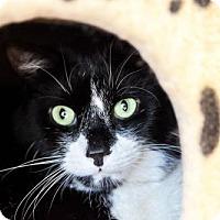 Adopt A Pet :: Meatloaf - Schaumburg, IL