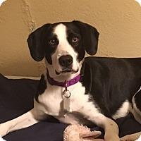 Adopt A Pet :: Lydia - Doylestown, PA