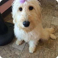 Adopt A Pet :: Marley - Manassas, VA