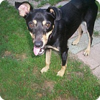 Adopt A Pet :: Sinclair - Baraboo, WI