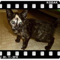 Adopt A Pet :: RAINY - Medford, WI
