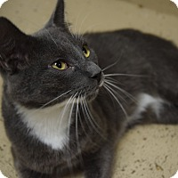 Adopt A Pet :: Sammy - Pottsville, PA