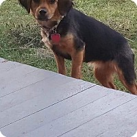 Terrier (Unknown Type, Small) Mix Dog for adoption in Northport, Alabama - Sophie