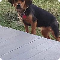 Adopt A Pet :: Sophie - Northport, AL