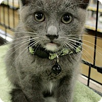 Adopt A Pet :: Shadow - Sacramento, CA