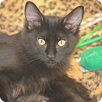Adopt A Pet :: Elizabeth - San Leon, TX