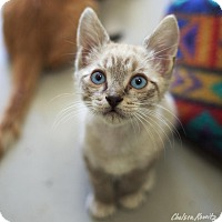 Adopt A Pet :: Trevor - Canyon Country, CA
