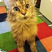 Adopt A Pet :: Sarabi - Edmond, OK