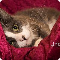 Adopt A Pet :: Juno - San Juan Capistrano, CA