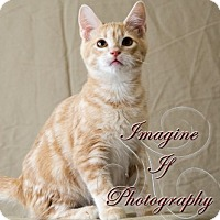 Adopt A Pet :: Sebastian - Oklahoma City, OK