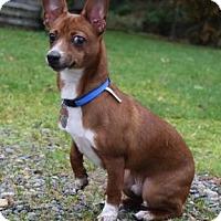 Adopt A Pet :: Mr. RED - McKenna, WA