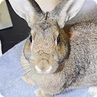 Adopt A Pet :: Asterisk - Oceanside, CA