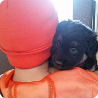 Adopt A Pet :: Babs - Walthill, NE