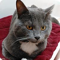 Adopt A Pet :: Tonka - Cloquet, MN