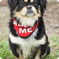 Adopt A Pet :: Bingo - Van Nuys, CA