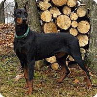 Adopt A Pet :: Wednesday - Bristolville, OH
