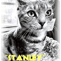 Adopt A Pet :: Stanley - Seaford, DE