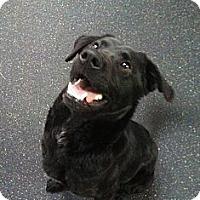 Adopt A Pet :: Mavis - Westpark, OH
