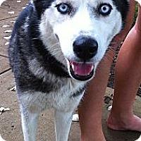 Adopt A Pet :: Sitka - Brattleboro, VT