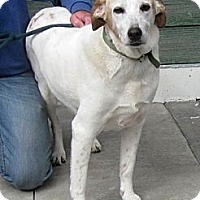Adopt A Pet :: Willie - Evans, CO