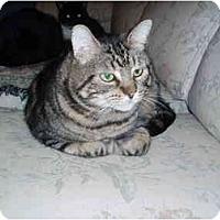 Adopt A Pet :: Toro - Hamburg, NY