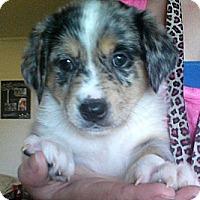 Adopt A Pet :: Lela - Greeley, CO