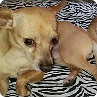 Adopt A Pet :: Marcel - Phoenix, AZ