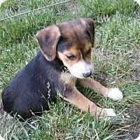 Adopt A Pet :: Dashi - Middletown, RI