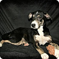 Adopt A Pet :: Sally - Lufkin, TX