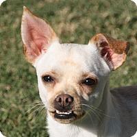 Adopt A Pet :: Champ - Edmonton, AB
