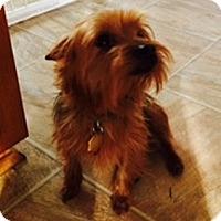 Adopt A Pet :: Wilson - Beavercreek, OH