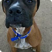 Adopt A Pet :: Benson - Phoenix, AZ