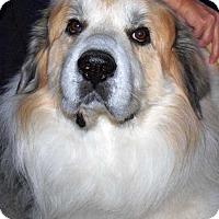 Adopt A Pet :: Harley2 in NY- Spec. Needs - Beacon, NY