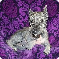 Adopt A Pet :: Dutchess - Laurel, MD
