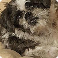 Adopt A Pet :: Rockie - Conway, AR