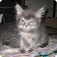 Adopt A Pet :: Merlot - Agoura Hills, CA