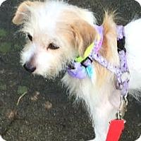 Adopt A Pet :: Maggie-ADOPTION PENDING - Boulder, CO
