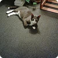 Adopt A Pet :: Smokey - Acushnet, MA