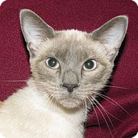 Adopt A Pet :: Elvira - Madison, IN
